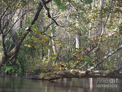 Photograph - St Joseph River  by Deborah DeLaBarre