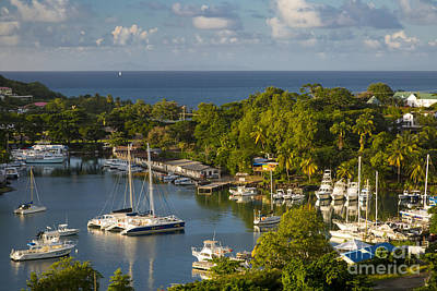 Photograph - St Lucia Harbor by Brian Jannsen