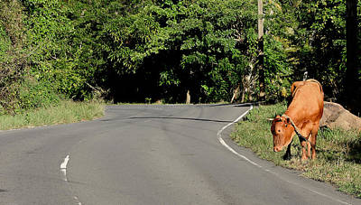 St. Lucia - Main Road Around Island Print by Brendan Reals