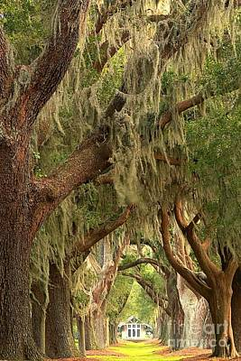 Photograph - St Simons Island Oaks by Adam Jewell