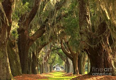 Large Oak Tree Photograph - St Simons Oaks by Adam Jewell