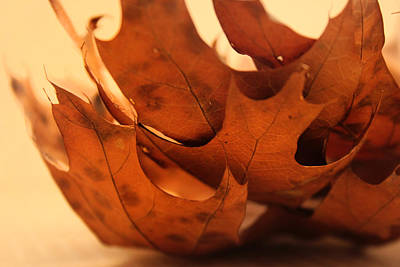 Photograph - Stack Of Brown Leaves In Color by Kelly Hazel