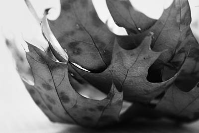 Photograph - Stack Of Leaves In Black And White by Kelly Hazel