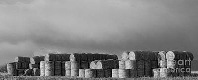 Stacked Round Hay Bales Bw Panorama Print by James BO  Insogna