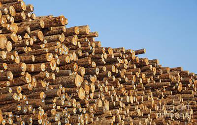 Stacks Of Logs Art Print