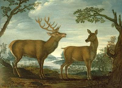 Deer Lake Photograph - Stag And Hind In A Wooded Landscape Panel by German School