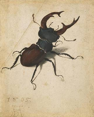 Painting - Stag Beetle by Albrecht Durer