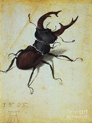 1505 Painting - Stag  Beetle by Pg Reproductions