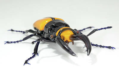 Handcrafted Photograph - Stag Beetle by Tomasz Litwin