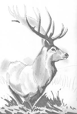 Drawing - Stag Drawing by Mike Jory