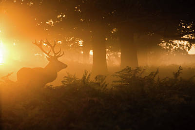 Stag In The Mist Art Print