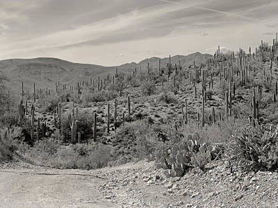 Old Country Roads Photograph - Saguaro Hills by Gordon Beck