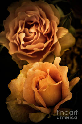 Rosaceae Photograph - Stages Of Bloom by Venetta Archer