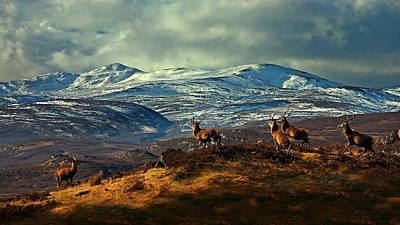 Photograph - Stags At Strathglass by Macrae Images