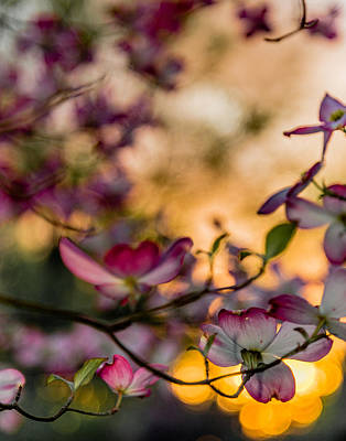 Photograph - Stained Glass Dogwood by Karen Saunders