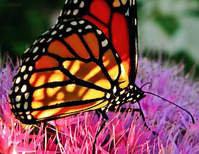 Stained Glass Monarch  Art Print by Chris Berry