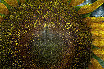 Stained Glass Sunflower Art Print