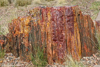 Photograph - Stained Stump by Susan Herber
