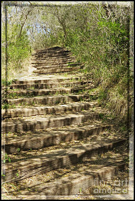 Country Lanes Digital Art - Stair Steps In The Forest by Ella Kaye Dickey