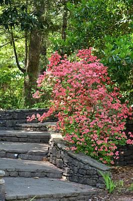 Photograph - Staircase Azaleas by Maria Urso