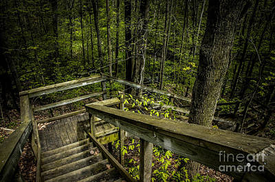 Photograph - Stairs In To The Woods by Ronald Grogan