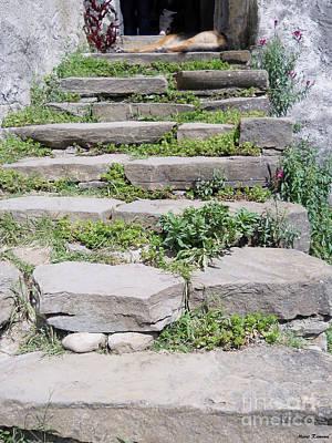 German Shephard Photograph - Stairs by Ramona Matei
