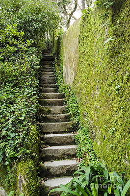 Photograph - Stairs Through The Ivy by Deborah Smolinske