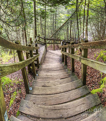 Upper Peninsula Photograph - Stairs To Miners Falls by Twenty Two North Photography
