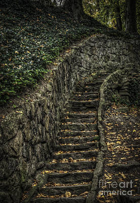 Photograph - Stairway In The Park by David Waldrop