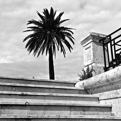 Photograph - Stairway Palm by Eric Tressler