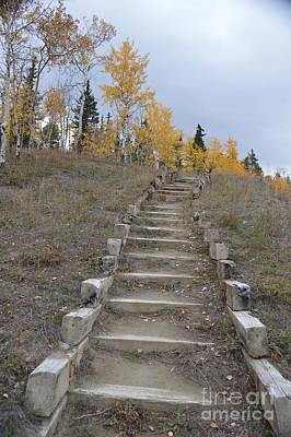 Wild And Wacky Portraits - Stairway to autumn by Brian Boyle