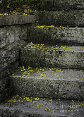 Photograph - Stairway To Spring by Curtis Dale