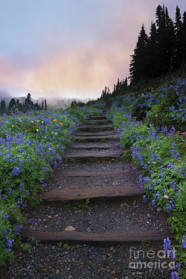 Stairway Photograph - Stairway To The Heavens by Mike Dawson