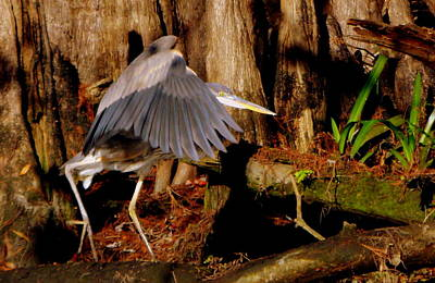 Photograph - Stalking Great Blue Heron 1 by Sheri McLeroy