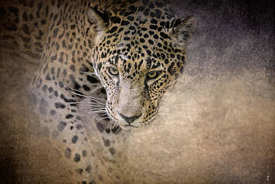 Photograph - Stalking Her Prey - Wildlife - Leopard by Jai Johnson
