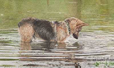 Wet On Wet Drawing - Stalking His First Fish by Helen Bailey