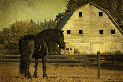 Stallion At Rest D1535 Art Print by Wes and Dotty Weber