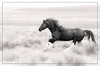 Forelock Photograph - Stallion Blur by Wes and Dotty Weber