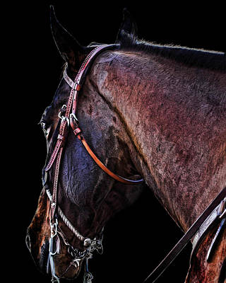 Horsey Photograph - Stallion by Camille Lopez