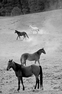 Photograph - Stallion Hillside Number One Black And White by Heather Kirk