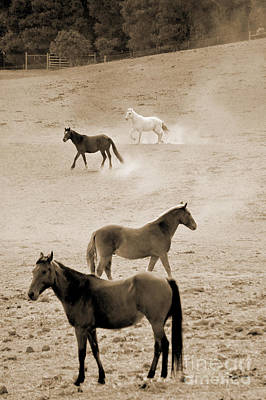 Photograph - Stallion Hillside Number One Sepia by Heather Kirk