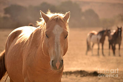 Photograph - Stallion In The Forefront Brighter by Heather Kirk