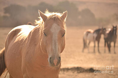 Photograph - Stallion In The Forefront Muted by Heather Kirk