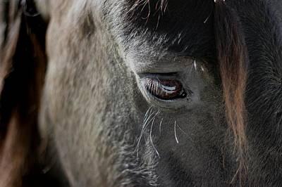 Photograph - Stallion by Stephanie Hollingsworth