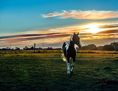 Stallion Sunset Art Print