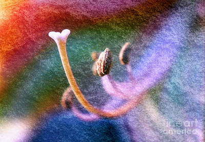 Photograph - Stamens And Stigma Rainbow by Charline Xia