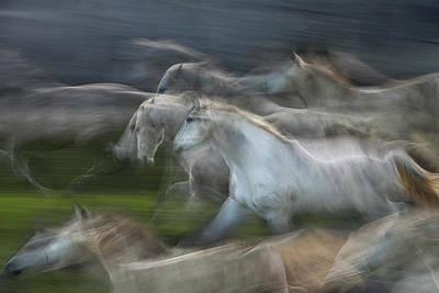 Horse Run Photograph - Stampedo by Milan Malovrh