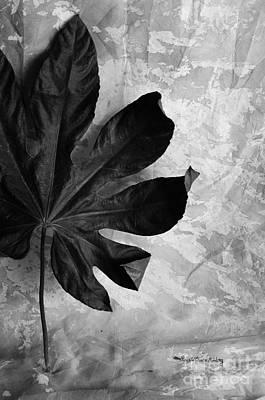 Photograph - Stand Alone by Randi Grace Nilsberg