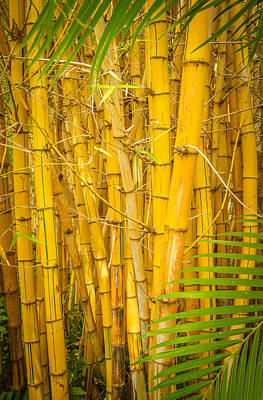 Photograph - Stand Of Bamboo by Roger Mullenhour