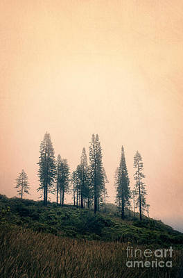 Photograph - Stand Of Trees Along The Waihe'e Ridge Trail by Edward Fielding